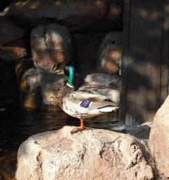 ducky piratetinkerbell tags california ca railroad wild mountain west water train wednesday waterfall [ 1024 x 768 Pixel ]