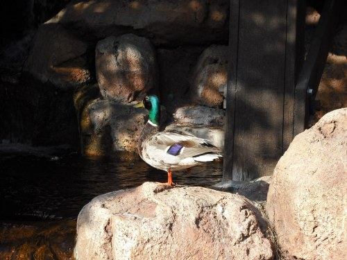 small resolution of ducky piratetinkerbell tags california ca railroad wild mountain west water train wednesday waterfall