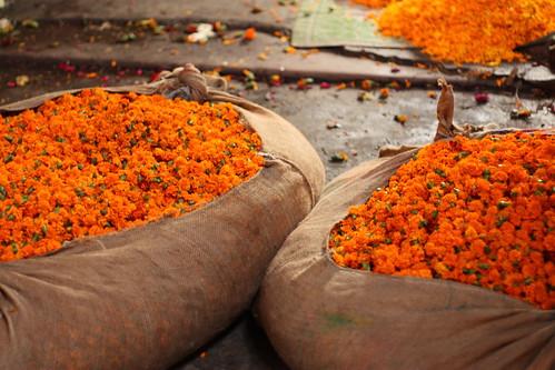 Flower markets of Delhi