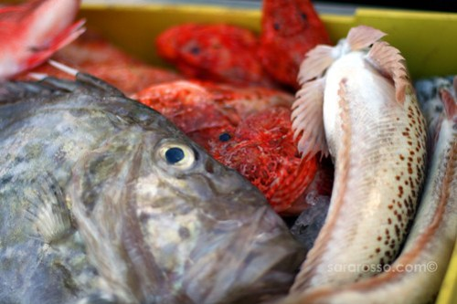 More fish for sale on Favignana Island, Sicily, Italy