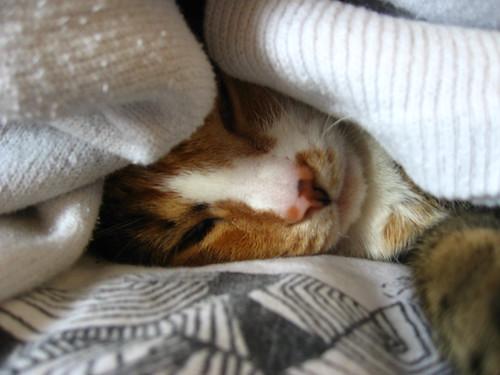 Sneezer in Socks