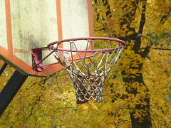 Nothing but net...and leaves