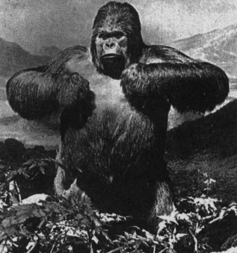 King Kong por ti.