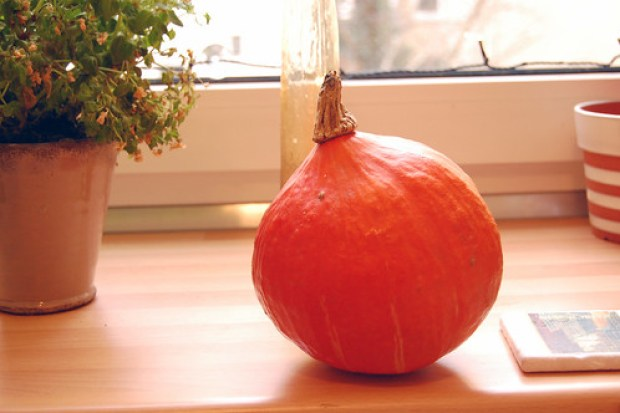 Pre-pie pumpkin