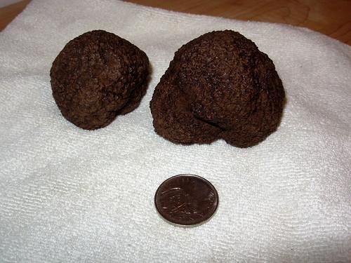 Tartufo Nero di Norcia - Fresh Black Truffles