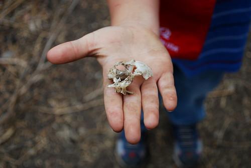 the skull margie found
