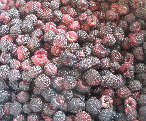 Black Raspberries Ready for Jam