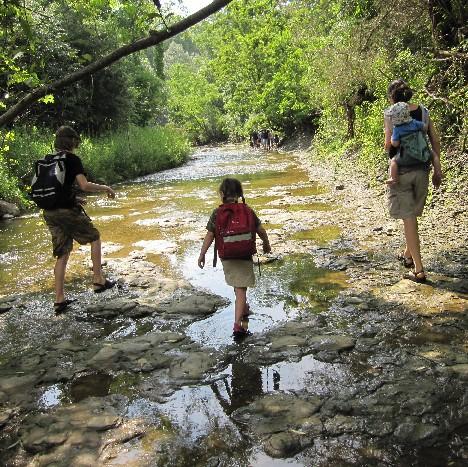 More Creek Walking