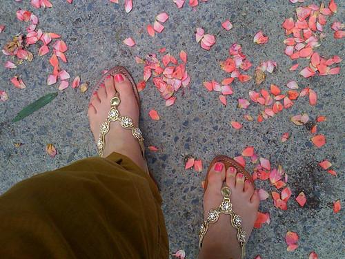 rose petals_0588