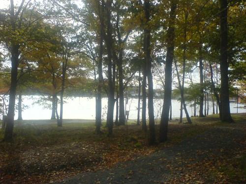 Birchcove park