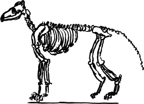 Dog skeleton, part 2