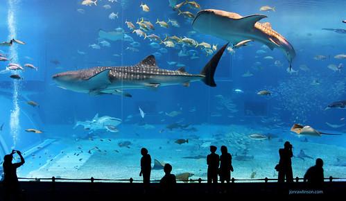 Kuroshio Sea - 2nd largest aquarium tank in the world - foto: jonrawlinson, flickr
