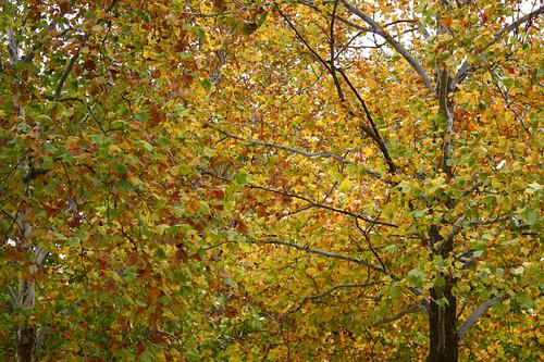 driveway tree
