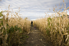 Pumpkin Patch / Corn Maze 2009