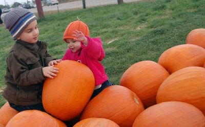 Jacob and Violet with the Pumpkins 1