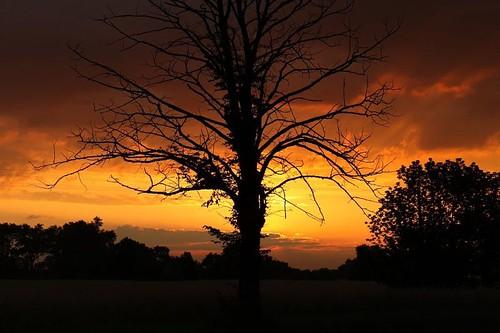 tree, drzewo, wschód słońca, sunrise