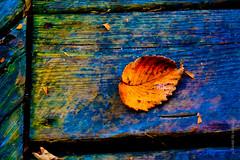 The Whisper of a Leaf