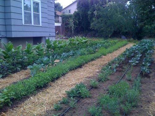 July 2009, Heat-loving Garden in Creston, SE Portland, Oregon, Cascadia
