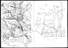 arbre-lac-berlin