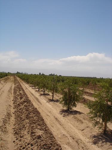 Finca Beltran 1 2007