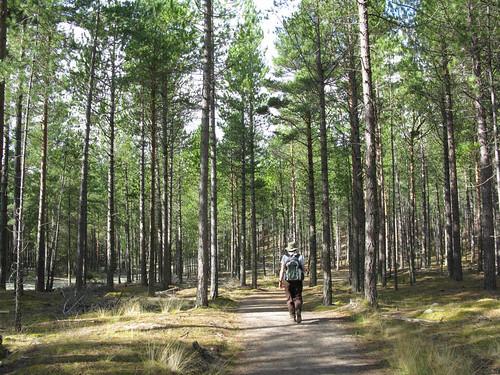 Enjoying a walk at Culbin Forest
