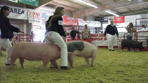 Pig train!