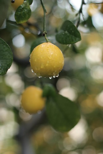 Storm lemons #2