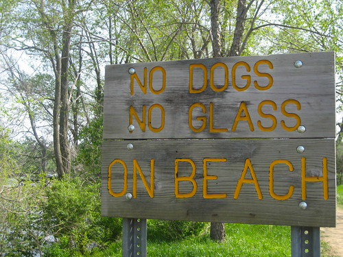 No Dogs No Glass