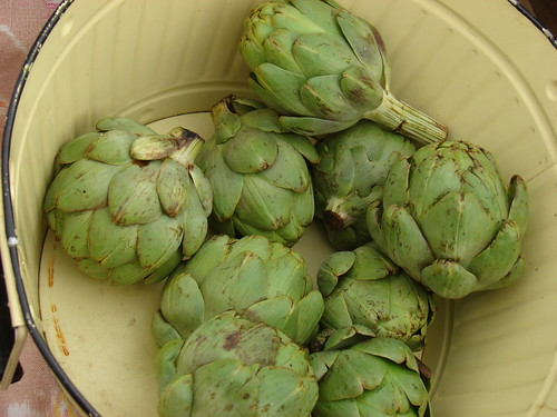 little artichokes