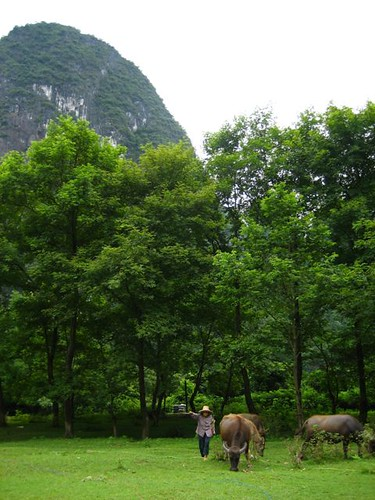 ชาวนา กับ จุ๋ยกู๊ว์ (ควาย แปลตรงตัวว่า วัวน้ำ ปวรออกเสียงเร็ว ก เหมือน ก๊อ อ่ะ)
