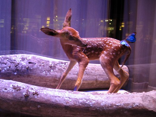 Deer and butterfly window display.