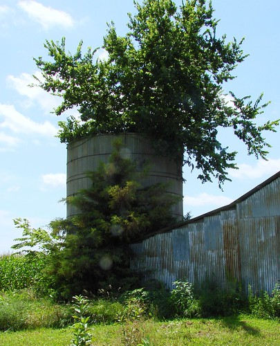 Silo with tree