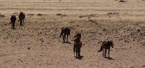 CABALLOS SALVAJES DE NAMIBIA03 by you.