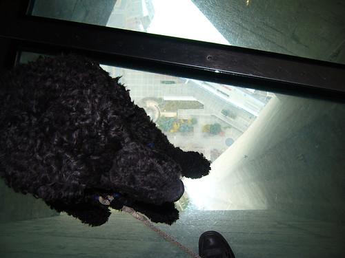 Yankee op glazen vloer in CN-toren