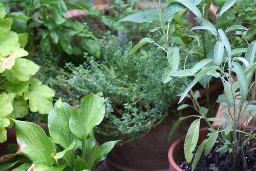 Herbs & More