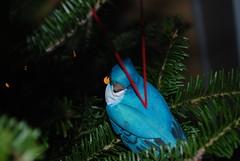 Blue Jay perhaps?