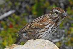Hide-and-Seek With A Sparrow