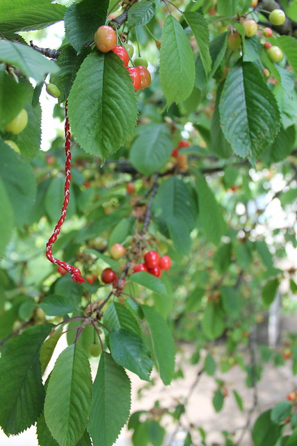 Martenitsa and growing cherries