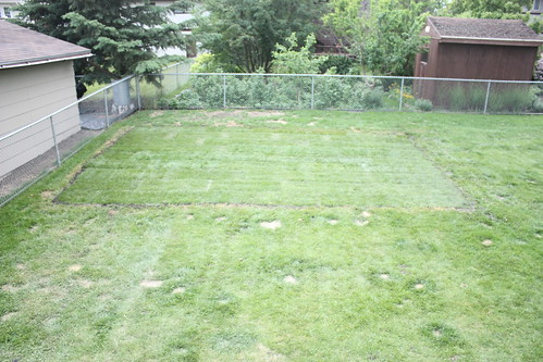 nice and lush - and makes the rest of the lawn look like crap!