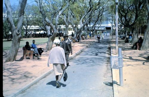 Harare Jacarandas