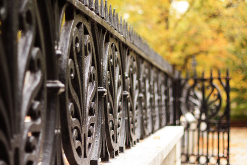 Favorite Fence with Fall Leaves