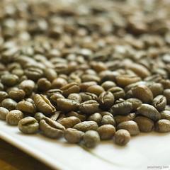 世界上最贵的咖啡Kopi Luwak