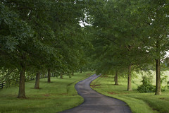 a winding road lined by trees