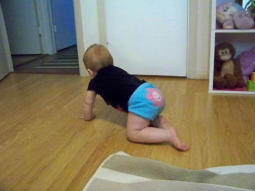 Little crawler