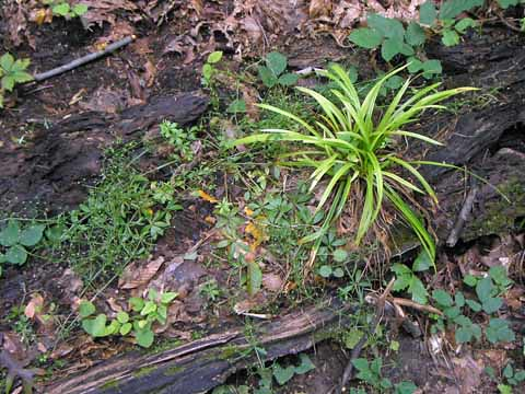 growth on the floor of the forest