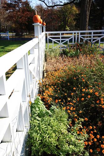 State of the Garden November 8 2009