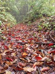 Hiking in Okutama