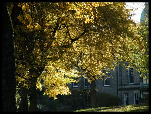 Autumn gold, Buxton