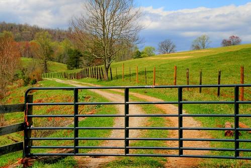 Spring Pastures