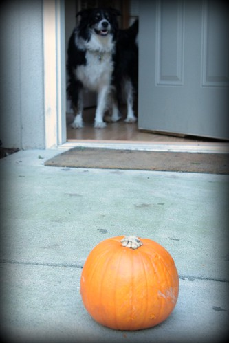 justice and his pumpkin